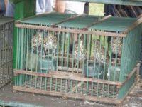 """Il blog della Vane. L'atrocità verso gli uccelli chiamati """"richiami vivi"""""""
